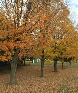 Leaves Ottawa Carling Chiropractic